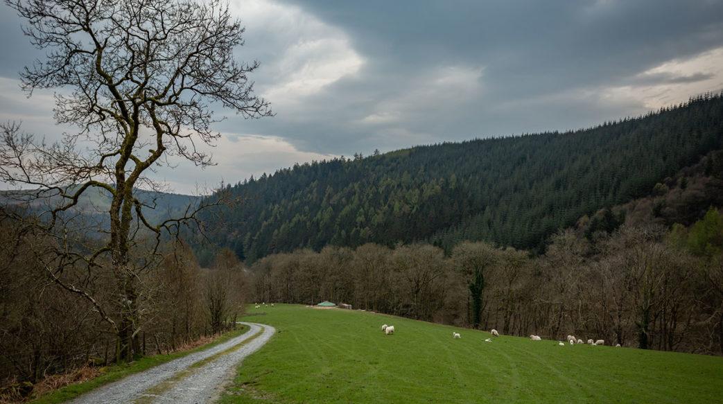 Experience digital detox in the heart of Wales' Dyfi forest.