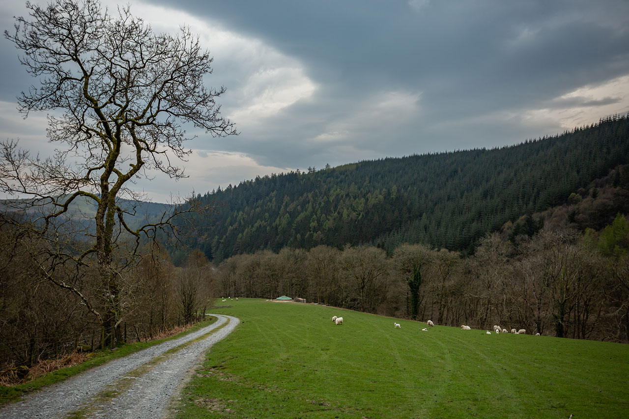 Experience digital detox in the heart of Wales' Dyfi forest.