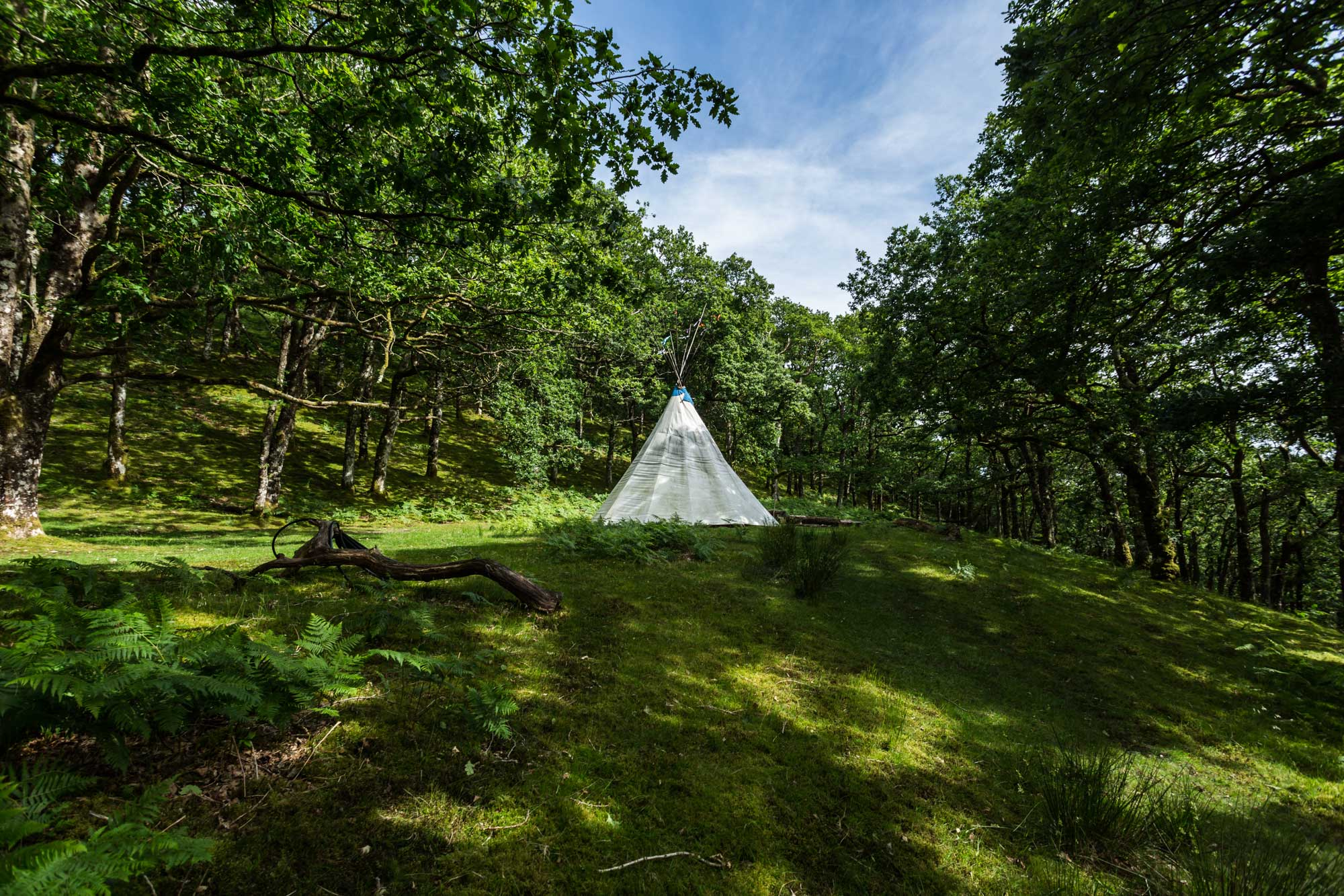Tipi in a clearing in an old oak forest